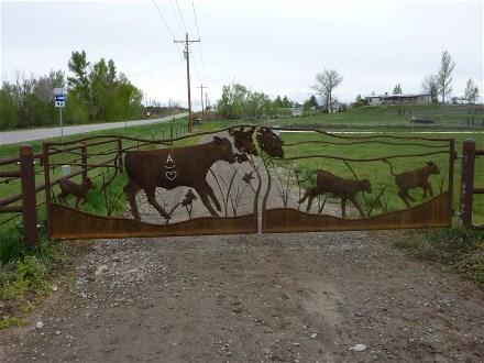 cow-gate